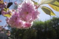 fleurs_043.jpg