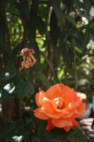 fleurs_050.jpg
