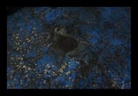 divers_014bis.jpg